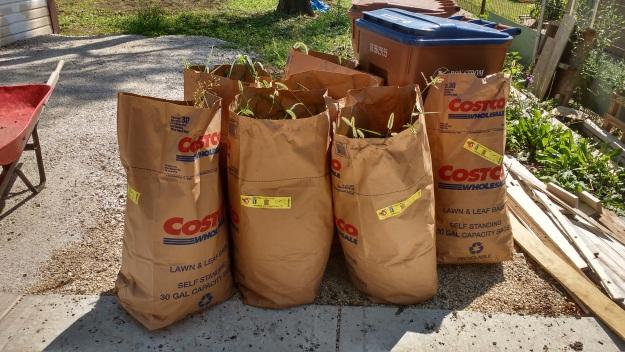 7 Bags of Weeds